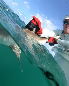 tampa shark fishing charter